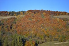 Autumn Colours - Trees on a hill in Slovakia stock photography