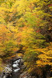 Autumn colours of valley Stock Image