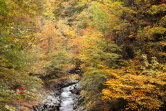 Autumn colours of valley Stock Images