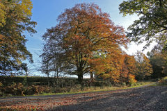 Autumn colours in Weardale England. Trees in they autumn colours in the heart of weardale with the sun clintting off them showing golds and yellows, reds and Stock Photos