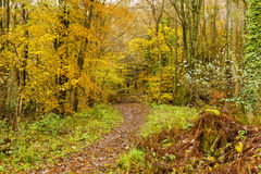 Autumn colours, woodland walk, November 2013 Royalty Free Stock Photography
