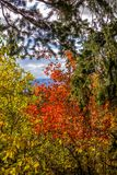 Autumn Colours in Wyoming Royalty Free Stock Photography