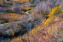 Autumn Colours in Wyoming Royalty Free Stock Images