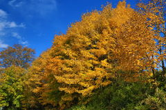 Autumn Colours, Zelezna Ruda, Boemerwald, Sumava Czech Republic Royalty Free Stock Photos