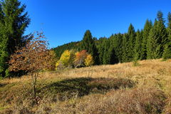 Autumn Colours, Zelezna Ruda, Boemerwald, Sumava Czech Republic Royalty Free Stock Photography