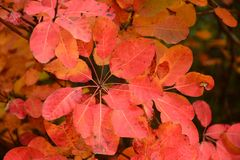 Autumn combination, red. Red leaves, total autumn color combination. Even the sun goes reddish Royalty Free Stock Photos
