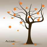 Autumn is Come Royalty Free Stock Photo