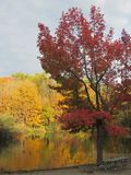 Autumn Comes aan Lily Lake in Eagle Creek Park stock foto