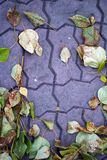 The autumn comes. Autumn leaves lie on the pavement royalty free stock photos
