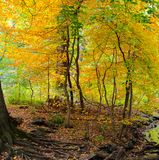 Autumn comes to a forested area in Central Park, NYC royalty free stock images