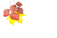 Autumn is coming. On a white background Royalty Free Stock Photos