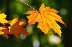 Autumn is coming Stock Photography