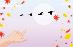Autumn is coming. Illustration about fall with red yellow leaves and geese migrating to warmer places Royalty Free Stock Image
