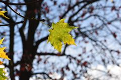 Autumn. Is coming Royalty Free Stock Photography
