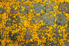 Autumn is coming. The first yellow leaves have fallen on the pebbles of the pavement in the city in the beginning of the autumn season Stock Images