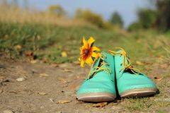 Autumn is coming. Green shoes and sunflower on the road Royalty Free Stock Photos