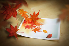 Autumn Coming To Life Royalty Free Stock Photo