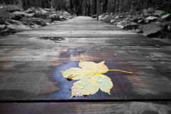 Autumn is comming Royalty Free Stock Photos