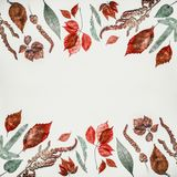 Autumn composing or pattern background made with various colorful fall leaves on light background, top view Royalty Free Stock Images