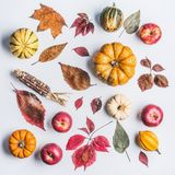 Autumn composing with pumpkin,corn , apples and leaves on light background, top view. Fall pattern made of natural organic farm pr. Oducts. Flat lay Royalty Free Stock Photos
