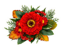 Autumn composithion with zinnia flowers Royalty Free Stock Photos