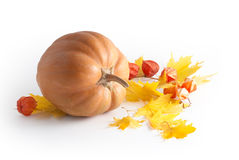 Autumn composition Stock Image