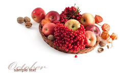 Autumn composition Royalty Free Stock Image