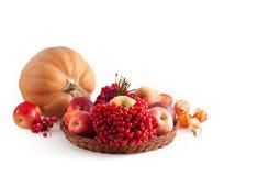 Autumn composition Stock Images