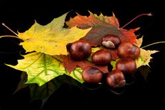 Autumn composition Royalty Free Stock Photography