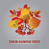 Autumn composition. Royalty Free Stock Image