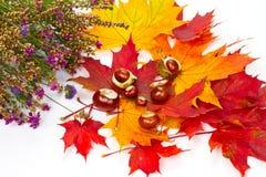 Autumn composition Stock Photography