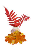 Autumn composition. Old vase with  red autumn leaves Stock Photos