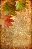 Autumn composition Stock Image