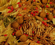 Autumn composition. Composition from autumn leaves, briars, arborvitae branches, spikelets, snails that can be used as background or wallpapers Royalty Free Stock Photos