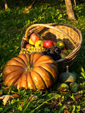 Autumn composition. A composition of autumnal fruits and vegetable royalty free stock photos