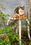 Autumn composition with a cat and apples Royalty Free Stock Photo