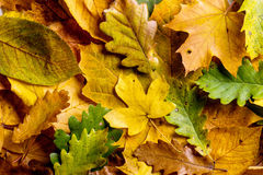 Autumn composition. Close up of colorful leaves. Studio shot. Stock Photos
