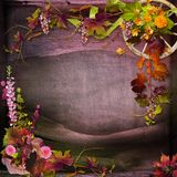 Autumn composition Royalty Free Stock Photos