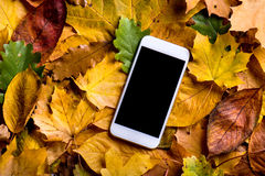 Autumn composition. Colorful leaves and smart phone. Studio shot Stock Photography
