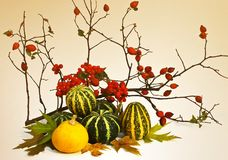 Autumn composition. The composition consists of a pair of pumpkins, viburnum, branches and wild rose. Autumn leaves stock photography