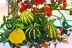 Autumn composition. The composition consists of a pair of pumpkins, viburnum, branches and wild rose stock photos
