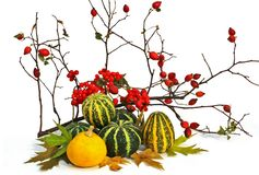 Autumn composition. The composition consists of a pair of pumpkins viburnum twigs and wild rose royalty free stock photography