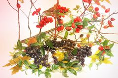 Autumn composition. The composition consists of viburnum, branches and wild rose. Autumn leaves stock photography