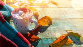 Autumn composition. Cup of cocoa with marshmallow, blanket royalty free stock image