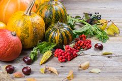 Autumn composition with different pumpkins, autumn leaves, chestnuts, rowan berries, apples and pears and wild rose berries. Royalty Free Stock Image