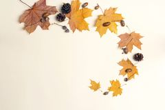 Autumn composition with dried maple leaves, cones and acorns on. Light background. Flat lay, top view, copy space stock photo