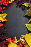 Autumn composition Royalty Free Stock Photo