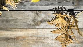 Autumn composition. Frame of autumn dry leaves on a wood background. Place to copy. Aun composition. Frame of aun dry leaves on a wood background. Aun background royalty free stock photos