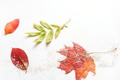 Autumn fall flat lay composition isolated on white background. stock photo