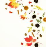 Autumn composition. Frame made of autumn maple tree leaves Royalty Free Stock Photos
